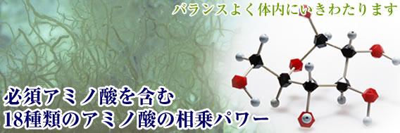 低分子加工された18種類のアミノ酸が体内に行き渡ります